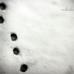"Day 123: Dec 28th, 2014 – ""Paws in the snow"""