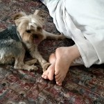 "Day 331: July 25th, 2015 – ""Hi paw!"""